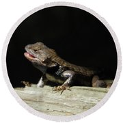 Talking Lizard Round Beach Towel