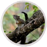 Talking Squirrel Round Beach Towel