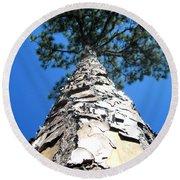 Tall Pine Tree In Summer Round Beach Towel