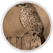 Tanager Finch Round Beach Towel