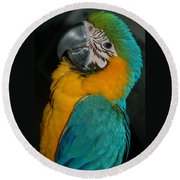 Tango, The Blue And Gold Macaw Round Beach Towel