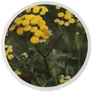 Tansy Blossoms Round Beach Towel