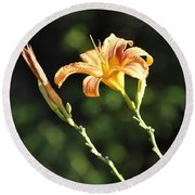 Tasmania Day Lily Round Beach Towel
