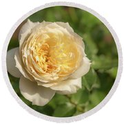 Tchaikovski Hybrid Tea Rose, White Rose Originally Produced By  Round Beach Towel
