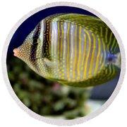 Technicolor Fish Round Beach Towel