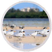 Terns At Fort Myers Round Beach Towel
