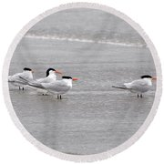 Terns Wading Round Beach Towel by Al Powell Photography USA
