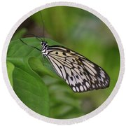 Terrific Capture Of A Paper Kite Butterfly On A Leaf Round Beach Towel
