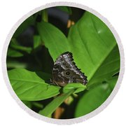 Terrific Eyespots On A Owl Butterfly On Leaves Round Beach Towel