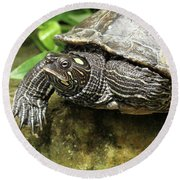 Tess The Map Turtle #2 Round Beach Towel