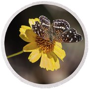 Texan Crescent Butterfly On Marigold-img_1348-2016 Round Beach Towel