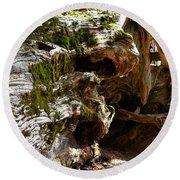 Textures On A Giant Sequoia Round Beach Towel