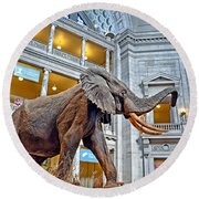 The African Bush Elephant In The Rotunda Of The National Museum Of Natural History Round Beach Towel