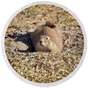 The Amazing Black-tailed Prairie Dog Round Beach Towel