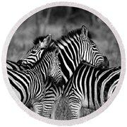 The Amazing Shot Of Zebra Round Beach Towel