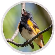 The American Redstart Round Beach Towel