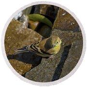 The Bath - American Goldfinch - Spinus Tristis Round Beach Towel