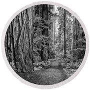 The Beautiful And Massive Giant Redwoods Round Beach Towel