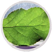 The Beauty Of A Leaf Round Beach Towel