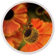 The Bee And The Helenium Round Beach Towel