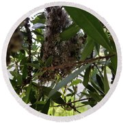 The Beginnings Of A Bushtit Nest Round Beach Towel