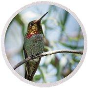 The Bird In The Foil Mask -- Anna's Hummingbird In Templeton, California Round Beach Towel