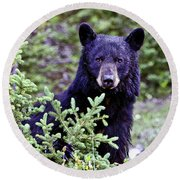 The Black Bear Stare Round Beach Towel