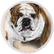 The Bull Dog Pup Round Beach Towel
