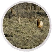The Bull Elk Round Beach Towel