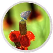 The Butterfly And The Coneflower Round Beach Towel
