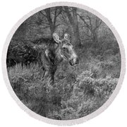 The Calm Of A Moose Bw Round Beach Towel