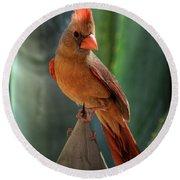 The Cardinal  Round Beach Towel