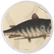 The Cat Fish (silurus Catus) Round Beach Towel