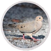 The Chipper Mourning Dove Round Beach Towel