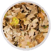 The Colors Of The Leaves In Autumn Round Beach Towel