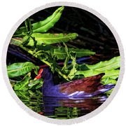 The Common Gallinule Round Beach Towel