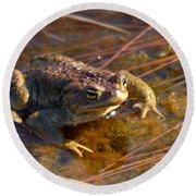 The Common Toad 1 Round Beach Towel