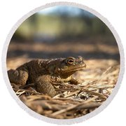 The Common Toad 4 Round Beach Towel