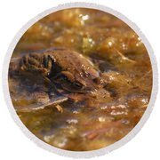 The Common Toads 2 Round Beach Towel