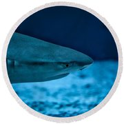 The Constant Search For Food Round Beach Towel