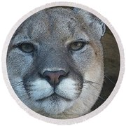 The Cougar 3 Round Beach Towel