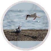 The Courtship Feeding - Series 1 Of 3 Round Beach Towel