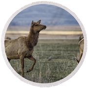 The Cow Elk Round Beach Towel