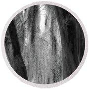 Cypress In The Bayou Round Beach Towel