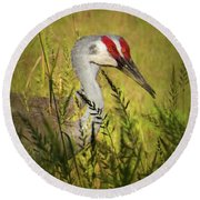 The Duo - Two Sandhill Cranes Round Beach Towel