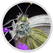 The Eye Of The Green-veined Butterfly. Round Beach Towel