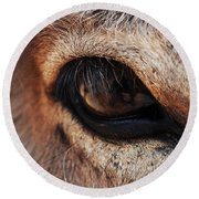 The Eye Of A Burro Round Beach Towel
