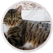 The Ferals-1412 Round Beach Towel