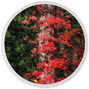 The First Maple Of Autumn Round Beach Towel