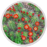 The First Week Of May, Claret Cup Cacti Begin To Bloom Throughout The Colorado Rockies.  Round Beach Towel